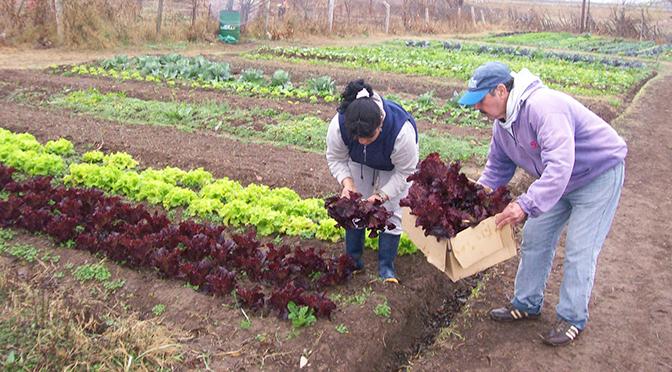 """[LNURadio] Organizaciones impulsan la implementación de """"cinturones verdes agroecológicos"""" en Chivilcoy"""